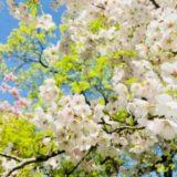 ノルウェーでは5月がお花見シーズン!? ノルウェー・オスロの5月の天候